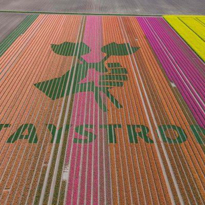 Na terra das tulipas…