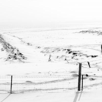 Foto do dia – cavalo Islandês