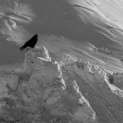 Foto do dia – corvo