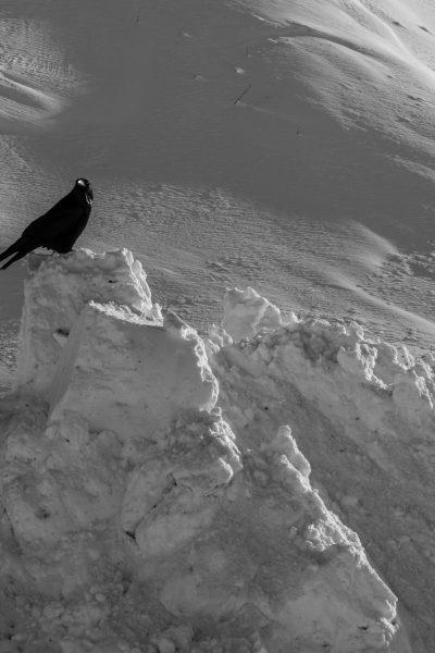 Foto do dia - corvo