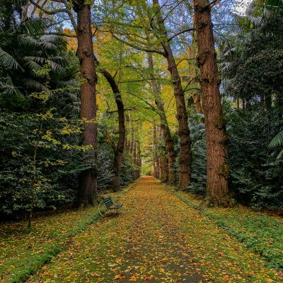 Parque Terra Nostra – Açores